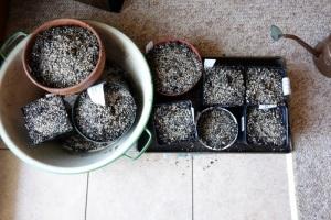 dahlia project