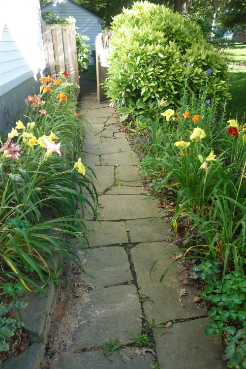 walkway garden in bloom