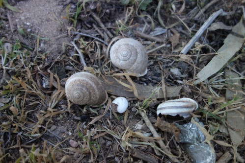 tree snails on the ground