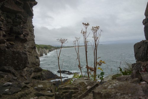 Irish coastal path2