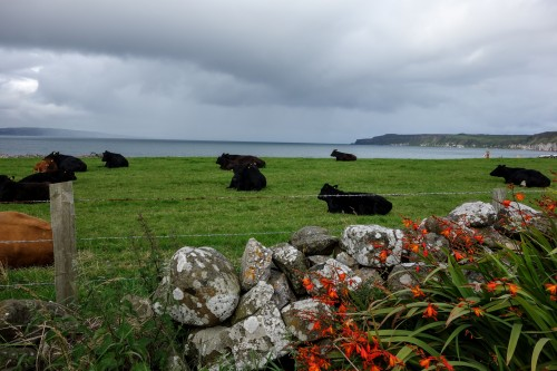 rathlin5