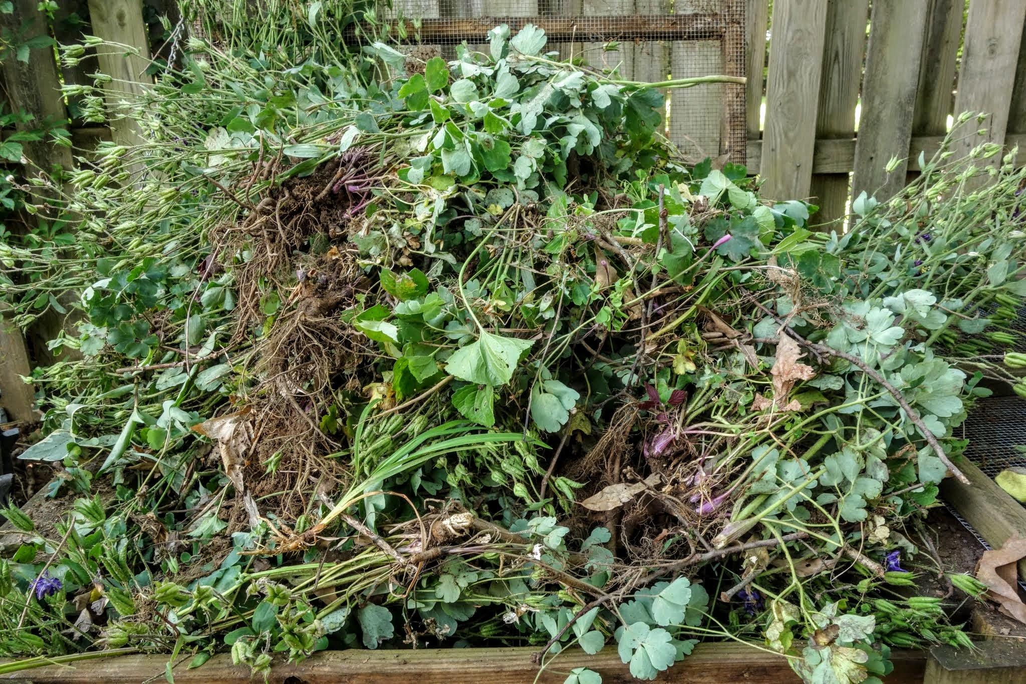 columbines in compost