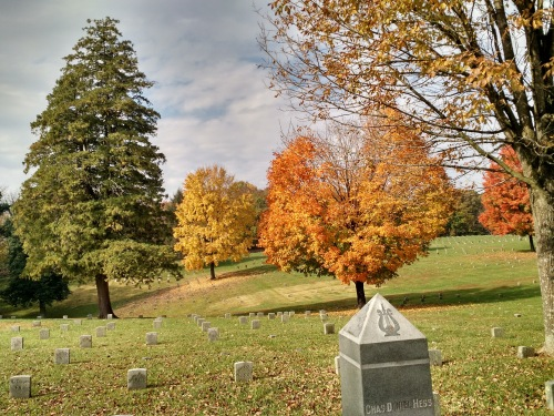 maples-in-the-cemetery