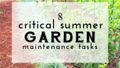 Summer-Garden-Maintenance-Tasks