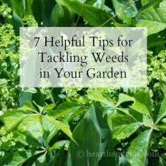 Tips-to-help-tackle-garden-weeds-at-Hearth-and-Vine